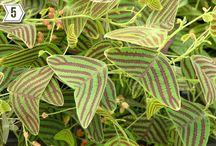 Ønskeplanter/ wishplants