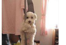 Doggy  (G-ddy)