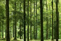 HUtan Wanagama (Wanagama Forest)