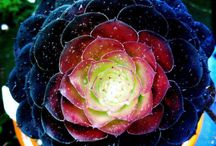 plants / by Heidi Neumann Lane