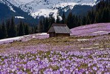 DISCOVERZAKOPANE.com / Discover Zakopane.com travel guide to Zakopane and Tatra Mountains