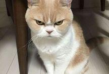 Pisic supărat