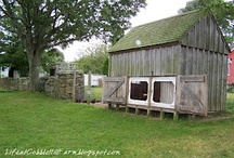 Chicken Coops / by Denise Bunn