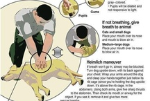 Pet Safety / Things to help keep Fido Safe