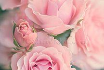 KWIATY_FLOWERS