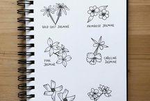 Botanical Linedrawing