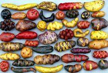 Garden - Potato and Sweet potato