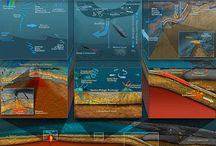.:: marine biology ::. / by Miriam Kilian☽