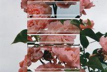 flower_february