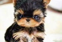 Mi futura mascota