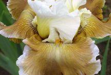 Gardening: Perennial Wish List