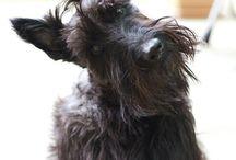 Bertie dogs