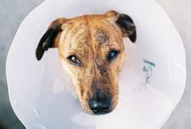 Allergies in Dogs/Kutya allergia / Because we support healthy nutrition of dogs. Mert a kutyák egészséges táplálását szorgalmazzuk. Web:cutieflower.com ; webáruház: www.cukorvirag.com
