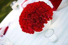 Nelken / Carnation