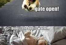 Humor og kæledyr