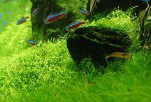 -Aquariums - and nice fish --