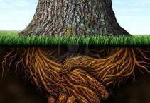 stromy a jejich tajemství