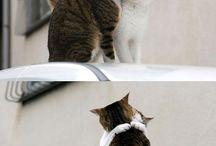 Cats Maniac