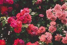 INSPO | FLOWERS