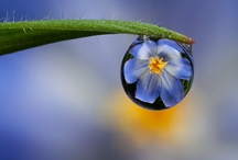 DewDrops/ Reflections / by Luna willow