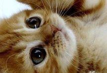 pussycat ....