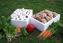Garden Food / So much food on offer right from your garden, just have a look.