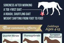 Horse vetting
