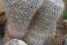 Különleges kaktuszok, pozsgások