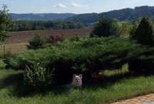Homedecor, garden, little dog