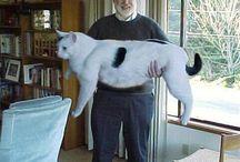 Gatos grandes / Imágenes de gatos grandes