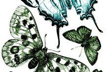 Motýľe