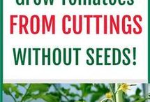 Grow, cuttings