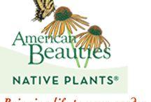 American Beauties Native Plants