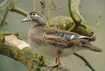 delightful ducks