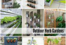 Ideas plantas