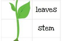 Gardening/sustainability