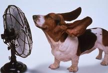 Air Conditioning Humor / Air Conditioning Humor