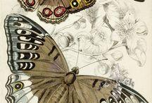 insectes et papillons
