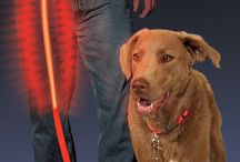 Cool Dog Stuff / Cool stuff for your dog like LED Collars, LED Balls, and more! / by Dogs N Pawz