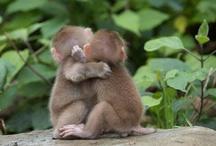 animales romanticos