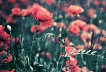 photography : flowers