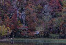 fotografia otoño san martin de los andes