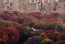 New York New York! / by Linda in Va.