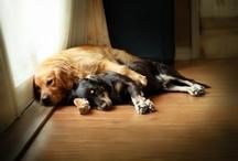 four-legged love...