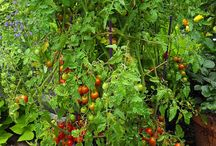 Edible Landscaping Ideas / by Tina_Vega