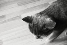 Cat Product Reviews & News / The latest cat news and reviews, including cat health, cat behaviour, cat learning, scratch posts, water fountains, indoor cat toys and games.