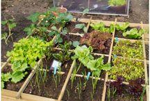 bahçe işleri / yetistiricilik