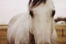 konie / Kochany koń