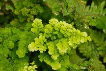 Plants / by tonya pierce