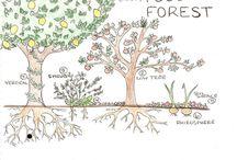Garden food forest